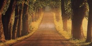 Reflexão - A Caminhada da Vida